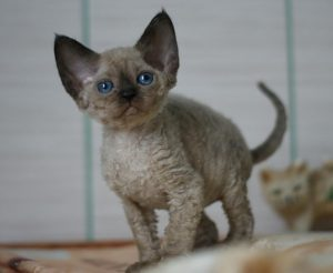 9 remédios naturais que os veterinários usam nos próprios animais. Vivernatural.com.br