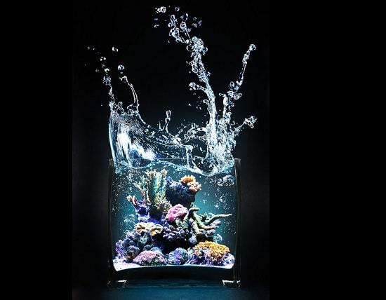 Crisoprásio água Câncer, Escorpião e Peixes.