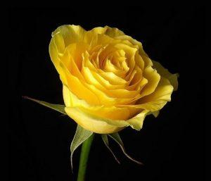 amarela positivo felicidade