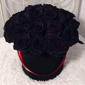 rosa negra recomeço