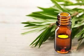 Óleo essencial da árvore do chá cosmetologia acne cabelos