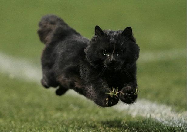 gato preto cores casa