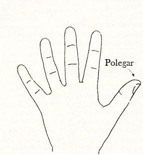 dedos polegar quiromancia