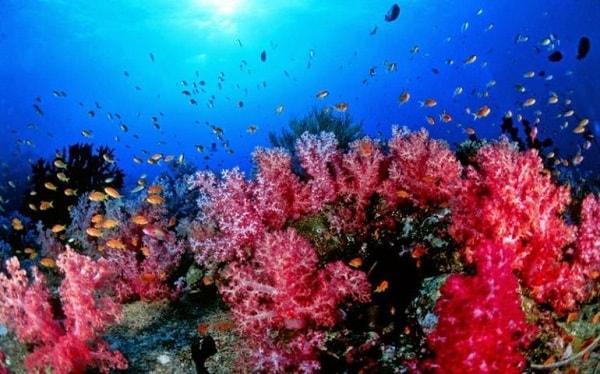 animal poder totem espirito coral xamanismo